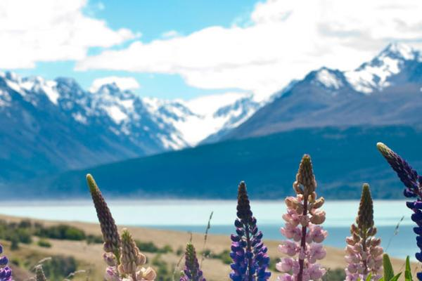 Write for Us » Planit NZ Travel